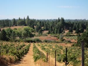 la rocca vineyards