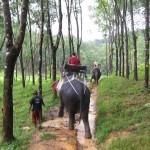 Elephant Trekking, Khao Sok