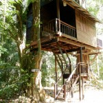 Our Jungle House - tree house
