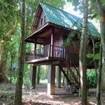 Our Jungle House - Thai House