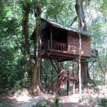 Our Jungle House - Treehouse
