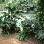 Our Jungle House - River